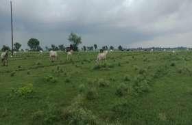 अन्ना जानवरों के आतंक से परेशान किसान, बोले - कोई नहीं सुन रहा नष्ट हो रही फसल