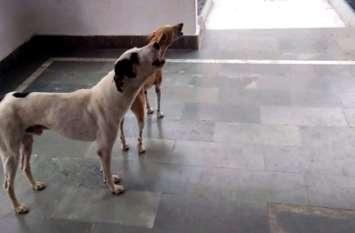 अजब गजब: ऐसा क्या है जो शिव जी की आरती के समय कुत्तों को खींच लाता है मंंदिर...