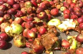 सिटी मजिस्ट्रेट का फल मंडी में छापा, सड़े हुए फल हो रहे थे बिक्री