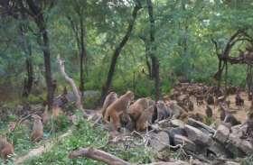 यहां हुआ बंदरों के दो गुटों में खूनी संघर्ष आधा दर्जन की मौत कई घायल भयभीत हुए तीर्थ यात्री