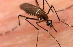 जरा से लापरवाही आपको बना सकती है मलेरिया, डेंगू और चिकनगुनिया का मरीज