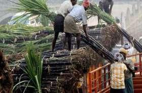 गन्ना किसानों के लिए आई बड़ी खबर, इस तारीख तक कराना होगा यह काम नहीं तो परेशान हो जाएंगे किसान