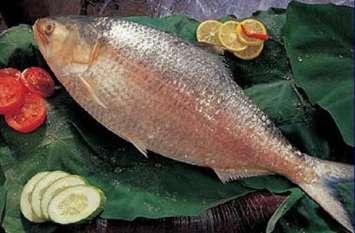 इस मछली के बिना बंगाल की रसोई अधूरी
