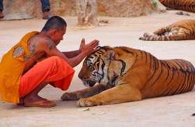 इस मंदिर में भगवान के साथ रहते हैं खूंखार जानवर, दर्शनार्थी को ऐसे मिलता है आशीर्वाद!