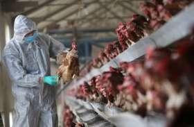 यूपी के इस जिले में मरी कई मुर्गियां, शासन ने जारी किया अलर्ट