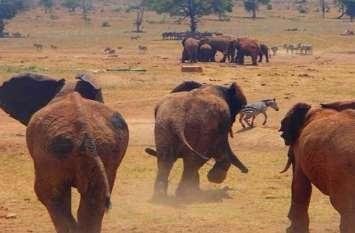 रोज 500 से भी ज्यादा जानवर क्यूं करते हैं इस शख्स का इंतजार, जिस दिन नहीं आता बहाते हैं आंसू