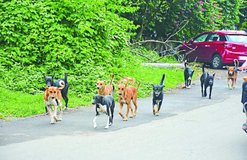 राजधानी में कुत्ते ही नहीं मवेशी, चूहों ने भी लोगों का जीना कर दिया मुहाल