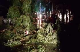 वेयरहाउस रोड पर लगा भारी पेड़ गिरा, बाल-बाल बचे यहां से गुजरने वाले