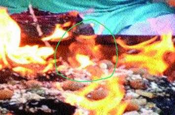 हवन कुंड की अग्नि में प्रकट हुए गणेश! देखते ही अचंभे में आए भक्त...Also see video