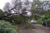 तेज हवा के साथ हुई बारिश, कहीं नुकसान तो किसी को फायदा, ग्रामीण क्षेत्रों में बिजली गुल, शहर में भी गिरे पेड़
