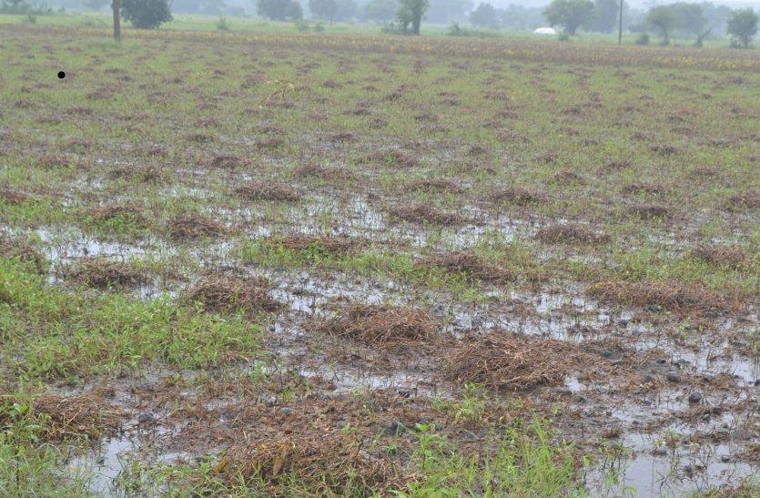 बारिश ने निकाला किसानों के आंख से आंसू