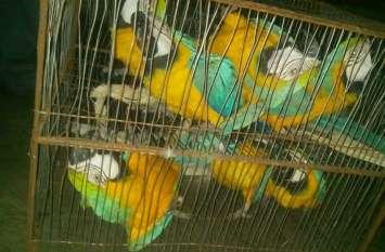विदेशी पक्षियों के साथ तस्कर गिरफ्तार