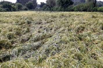 किसानों के  अरमान 'धो' गया लौटता मानसून