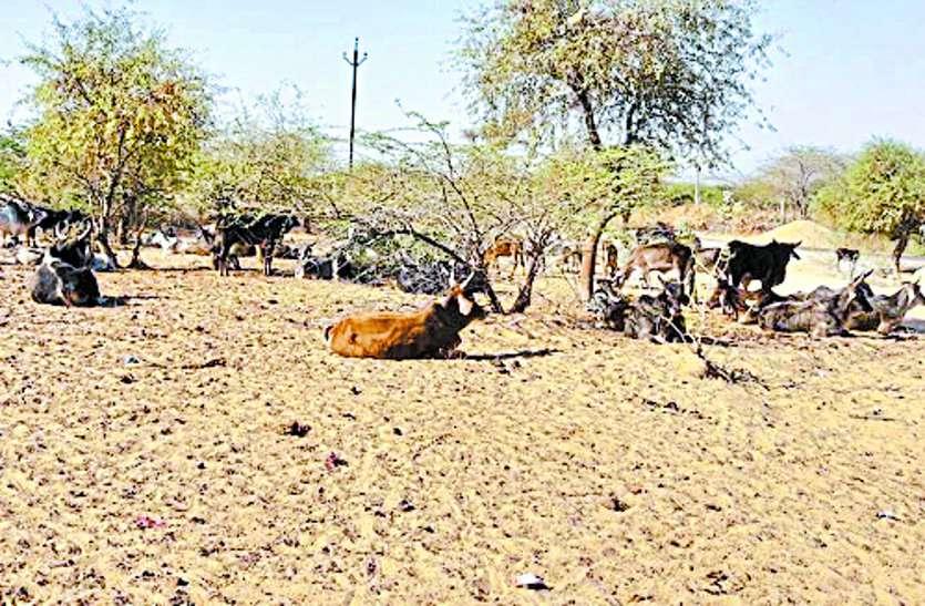 किसानों की दिवाली पर अकाल का साया