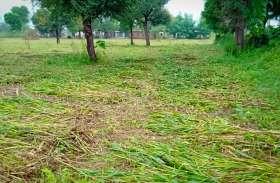 बूंदों से किसानों के माथे पर पसीना, फसल खराबे की चिंता
