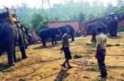 छत्तीसगढ़ से आए जंगली हाथी की ट्रैंकुलाइज करने के बाद सीधी जिले में मौत
