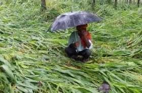 बरसात से परेशान किसानाें के लिए आई राहत भरी खबर, जानिए क्या करने जा रही है भाजपा