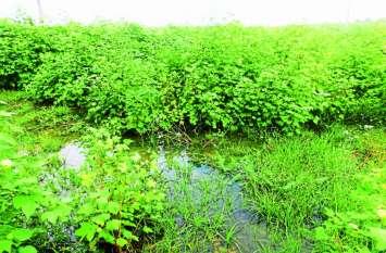 तेज बारिश के बाद फसलों में भरा पानी, किसानों को होगा भारी नुकसान