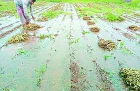 किसानों की फसले हुई खराब, ग्रामसेवक ने कहा सर्वे का आदेश नहीं