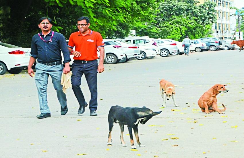 गांधी नगर और गुनगा में आवारा कुत्तों की वजह से दो बाइक सवार लोगों की मौत