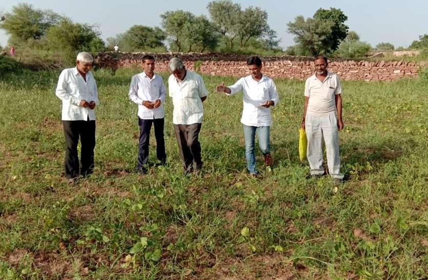 खराब फसलों की सुध लेने खेतों में पहुंचने लगे पटवारी