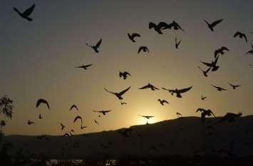 pics - शाम ढली घर लौटे पंछी...