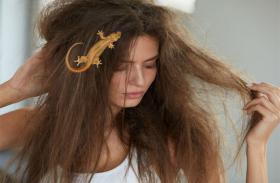बालों पर गिरे छिपकली मतलब मुत्यु सामने खड़ी है, जानें छिपकली से जुड़े शकुन और अपशकुन