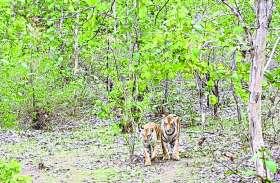 वन्यजीव और मनुष्यों के बीच टकराव दिनोंं दिन बढता जा रहा है: ओपी शर्मा