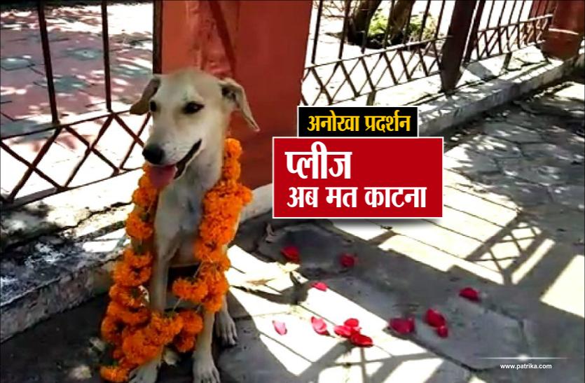 अनोखा प्रदर्शनः कुत्तों को पहनाई फूलों की माला, कहा- अब किसी को मत काटना