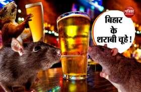 बिहार में शराबी चूहों का आतंक, पी गए बीयर की ढेरों कैन!