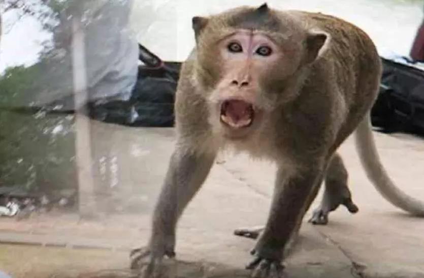 बंदरों के उत्पात से आतंकित हैं पुराने पटना साहिब के लोग