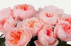 अगर प्रेमिका कर दे इस गुलाब की डिमांड तो तुरंत हो जाएं सावधान, डूब सकते हैं कर्जे में
