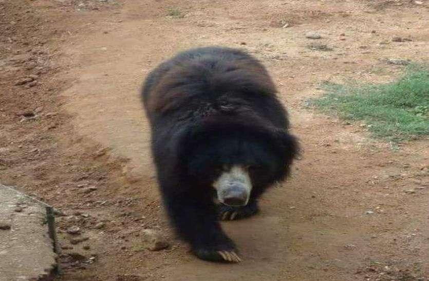 वन क्षेत्र में सूख चुके जलस्रोत, चार एनिकट बनने से भालुओं का आबादी क्षेत्र में रुकेगा प्रवेश