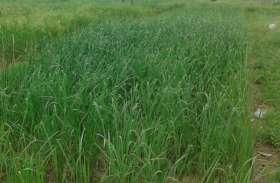 किसानों को खरीफ की फसल में मिलेगा भारी झटका, होगा नुकसान