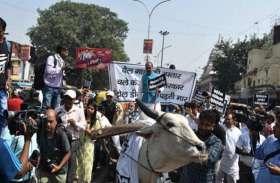 VIDEO: पेट्रोल की कीमत घटाने को लेकर दिल्ली सरकार के खिलाफ बैलगाड़ी चलाकर भाजपा ने किया प्रदर्शन