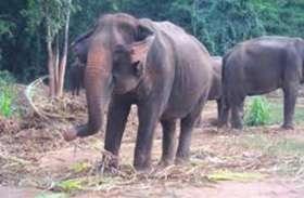 11 हाथियों को अचानक गांव में देख ग्रामीणों की फटी रह गईं आंखें, जब तक खदेड़ पाते तब तक...