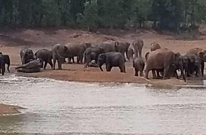 #खोरी गांव के राजा जंगल में 54 हाथियों के दल ने डाला डेरा, नन्हें हाथी का भी हुआ जन्म