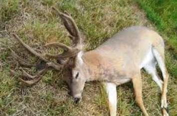BREAKING: जानवरों की मौजूदगी जानने के लिए लगाए गए ट्रैपकिंग कैमरे