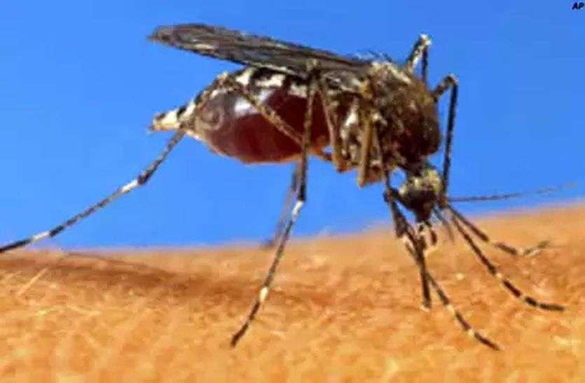 शहर में पैर पसार रहा डेंगू, मलेरिया, नहीं हो रहा दवा छिड़काव