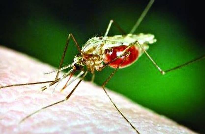 Health Tips : डेंगू, चिकुनगुनिया और मलेरिया जैसी बीमारियों से ऐसे करें बचाव, अपनाएं ये टिप्स