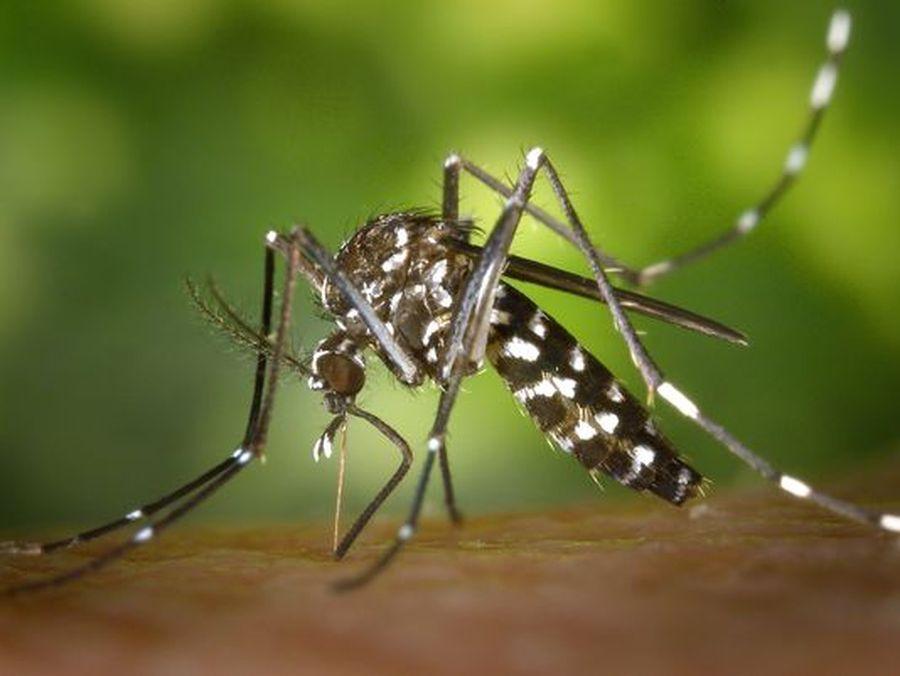 अजमेर जिले में डेंगू का डंक, हैल्थ विभाग के दावे हो रहे फेल