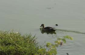 pics - आप भी देखें आनासागर झील में जल विहार करते पक्षियों की सुंदर तस्वीरें