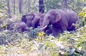 हाथियों के कुनबे में आया नया मेहमान
