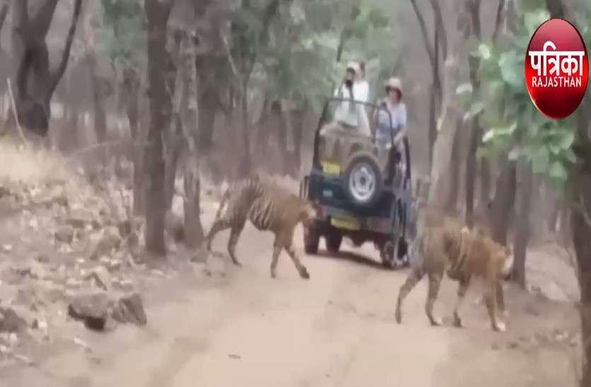 सरिस्का की बाघिन का बेरहमी से शिकार