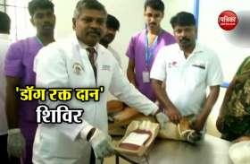 चेन्नई: एक अस्पताल ने लगाया अनोखा रक्त दान शिविर, शामिल हुए 50 से अधिक डॉग्स