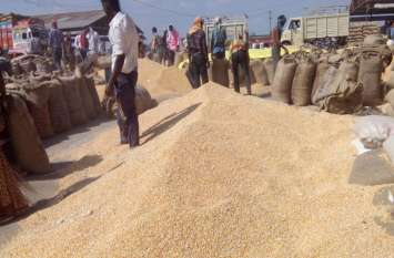 किसान ने थाने में की शिकायत, आरोप समिति प्रबंधक मांग रहा 10 हजार रुपए रुपए