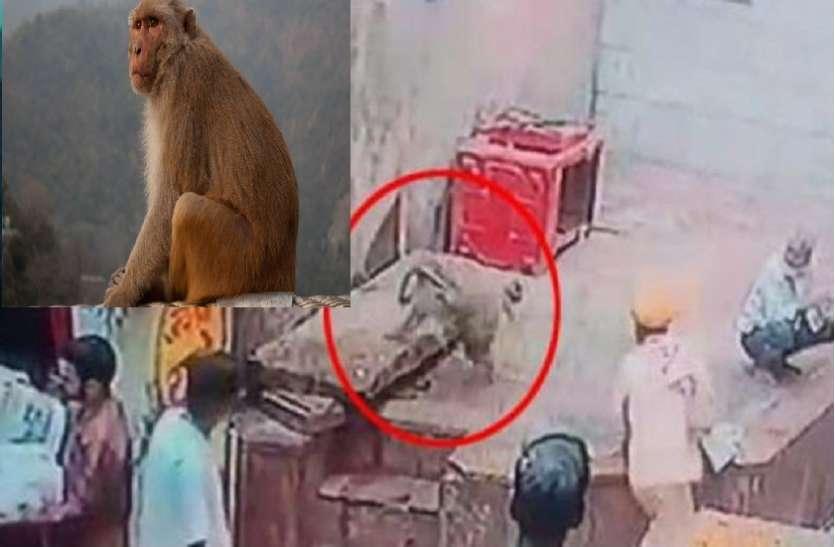 सपेरे के हाथ से सांप छीनकर भागा बंदर, फिर जो हुआ उसके बारे में कल्पना भी करना है मुश्किल