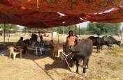 पशु मेले में मच रही मनोरंजन की धूम, खरीदारी व सांस्कृतिक प्रस्तुतियों का आकर्षण