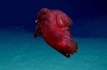 समुद्र में तैरता दिखा बिना सिर का अजीब जीव, तस्वीरें देख छूट सकते हैं पसीने!