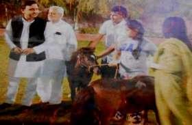 बटेश्वर मेले में बिक्री के लिए पहुंचे अखिलेश यादव के ऑस्ट्रेलियन घोड़ों की कीमत का सच...